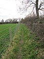 Fence and hedge - geograph.org.uk - 2312579.jpg