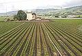 Field near Gilroy, California (4691025659).jpg