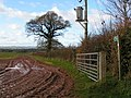 Field near Lower Pilehayes Farm - geograph.org.uk - 1601028.jpg