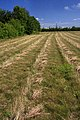 Field near Swaffham Prior - geograph.org.uk - 1399798.jpg