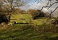 Fields at Hisley (2) - geograph.org.uk - 1086173.jpg