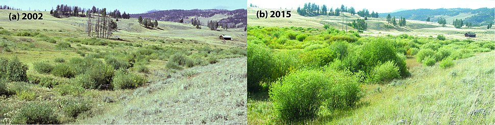 Fig. 1 -Riparian willow recovery (26485120926) horiz