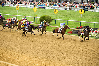 2013 Preakness Stakes - Oxbow (far right) leads into the straight during the early stages of the Preakness Stakes.