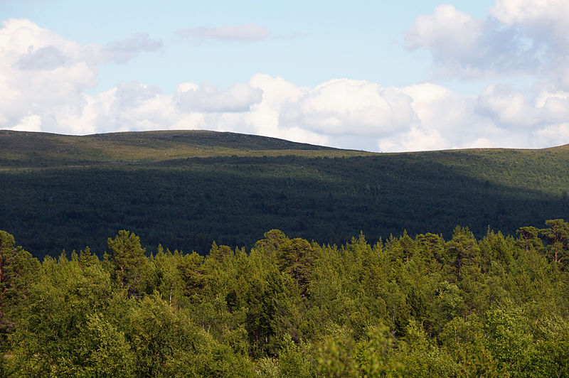 File:Fjallnara skog. Lappland Sverige.jpg