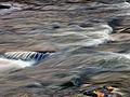 Flickr - Nicholas T - Fishing Creek Nature Preserve (4).jpg
