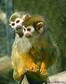 Flickr - law keven - I've got a Monkey on my back......jpg