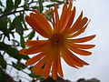 Flora Oued Zitoun4.JPG