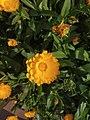 Flower1.1.jpg
