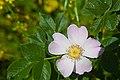 Flower 4248.jpg