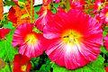 Flowers0.jpg