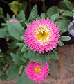 Flowers - Uncategorised Garden plants 83.JPG