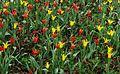 Flowers Brussels April 2012-2.jpg