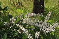 Flowers of Kerala04484.jpg
