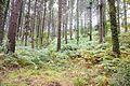 Forest near Bermeo 3.jpg