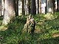Forest near the Große Bode 09.jpg
