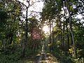 Forest of buxa.jpg