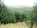 Forest view - geograph.org.uk - 237654.jpg