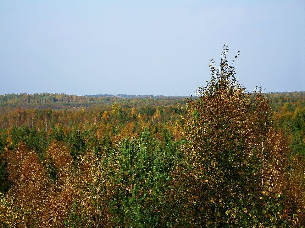 Forests around Soodla River