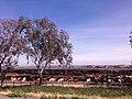 Fresno, CA, USA - panoramio (71).jpg