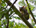 Friendly Squirrel (4838980769).jpg