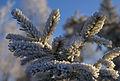 Frozen (2114666343).jpg