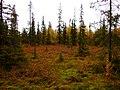 G. Apatity, Murmanskaya oblast', Russia - panoramio (14).jpg