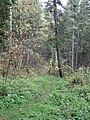 G. Tomsk, Tomskaya oblast', Russia - panoramio (6).jpg