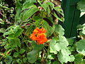 GBG Flower 21.JPG