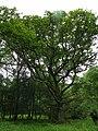 GOC Berkhamsted & Frithsden 018 Ashridge Estate (28163275110).jpg