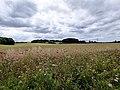 GOC Letchworth 036 Countryside (41163480532).jpg