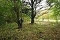 Garden-abandoned-20-years-4.jpg