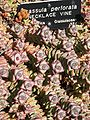 Gardenology.org-IMG 0394 hunt07mar.jpg