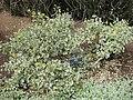 Gardenology.org-IMG 5078 hunt0904.jpg