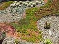 Gardenology.org-IMG 9705 rbgm10dec.jpg