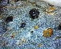 Garnet-mica Schist 01 10x (25785512598).jpg