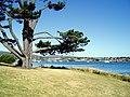 George Town, Tasmania - panoramio.jpg