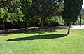 Gespa i ombra de xiprer, parc de Benicalap.JPG