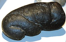 Smmothly rounded dark brown rock-like coprolite