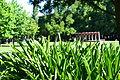 Glebe Park Canberra (8215970217).jpg