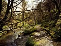Glen Mooar - geograph.org.uk - 3123.jpg
