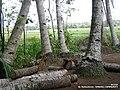 Glugu - panoramio.jpg