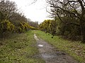 Gorse-lined track, Rushmere common - geograph.org.uk - 1223027.jpg