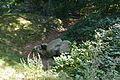 Grabhügel in den Hademarscher Bergen NIK 4242.JPG