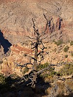 File:Grand Canyon, October 2008 (2984856743).jpg
