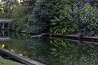 Great Blue Heron 3 NBG LR.jpg