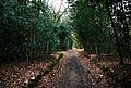 Green Lane in Holm Wood - geograph.org.uk - 709005.jpg