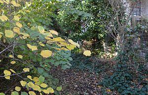 Greville Place nature reserve - Image: Greville Place 4