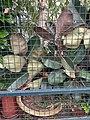 HK CWB 銅鑼灣 Causeway Bay 高士威道 Causeway Road 火龍徑 Fire Dragon Path QC 皇仁書院 Queen's College's gardening October 2019 SS2 11.jpg