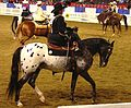 Half Arabian Ladies Western Sidesaddle (2668749735).jpg
