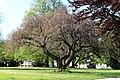 Heilbronn Friedenspark 8066.JPG